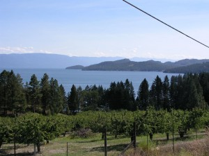Looking SE over the cherry orchards on Caroline Point