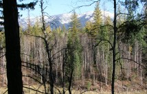 From Swan Sites - views of the Swan Mountain Range