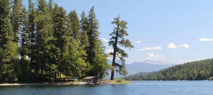 Sentinel Pine - Swan Lake