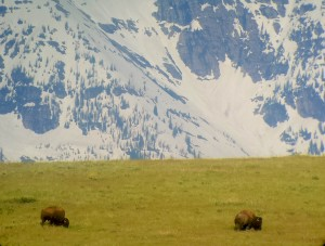 The Bison Range is located south of Charlo, MT